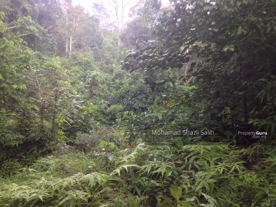Agri Land With Oud Plantation, Sepang, 1.66 acre FOR SALE  123940547
