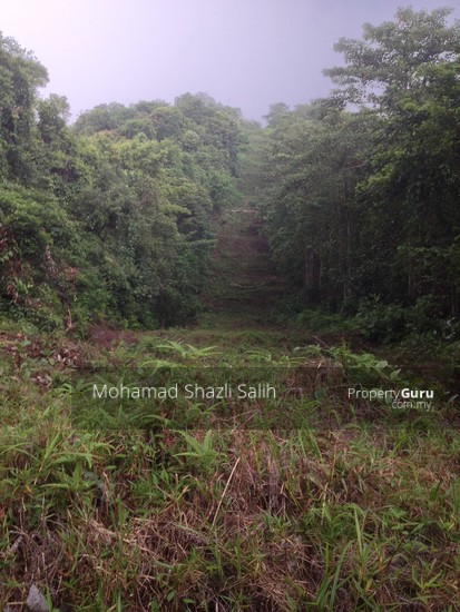 Agri Land With Oud Plantation, Sepang, 1.66 acre FOR SALE  123940553