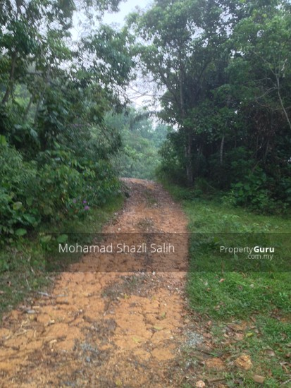 Agri Land With Oud Plantation, Sepang, 1.66 acre FOR SALE  123940565