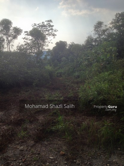 Agri Land With Oud Plantation, Sepang, 1.66 acre FOR SALE  123940607