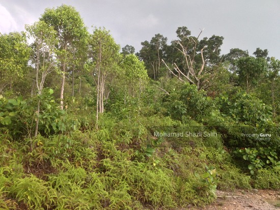 Agri Land With Oud Plantation, Sepang, 1.66 acre FOR SALE  123940613