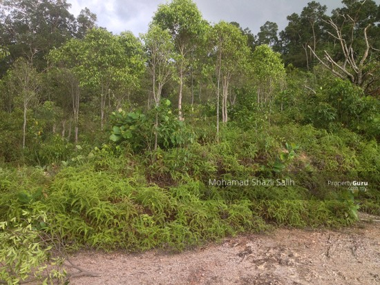 Agri Land With Oud Plantation, Sepang, 1.66 acre FOR SALE  123940625
