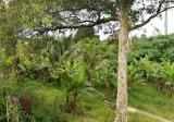 Durian Land, Raub - Property For Sale in Malaysia