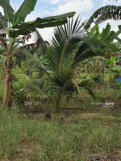 Simpang Rengam Agriculture Fruit Farm Land  150088172