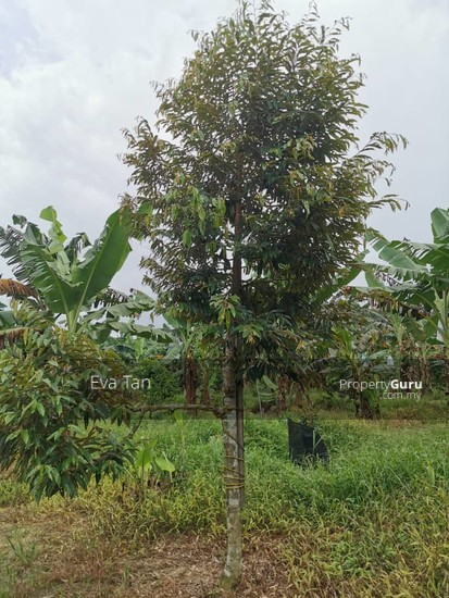 Simpang Rengam Agriculture Fruit Farm Land  150088177