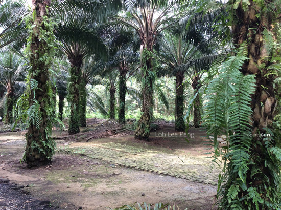 Gelang Patah Malaysia  city pictures gallery : Gelang Patah, Gelang Patah, Gelang Patah, Johor, Agricultural Land for ...